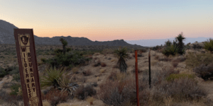 palm-springs-mojave-feature-image-800x400
