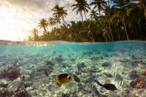 underwater-scene-with-reef-and-tropical-fish-small.jpg