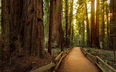 hiking-trail-in-redwood-forest-2000-PQ9JNGB